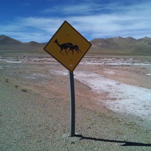 Llama crossing - Road sign - Five Senses traveller